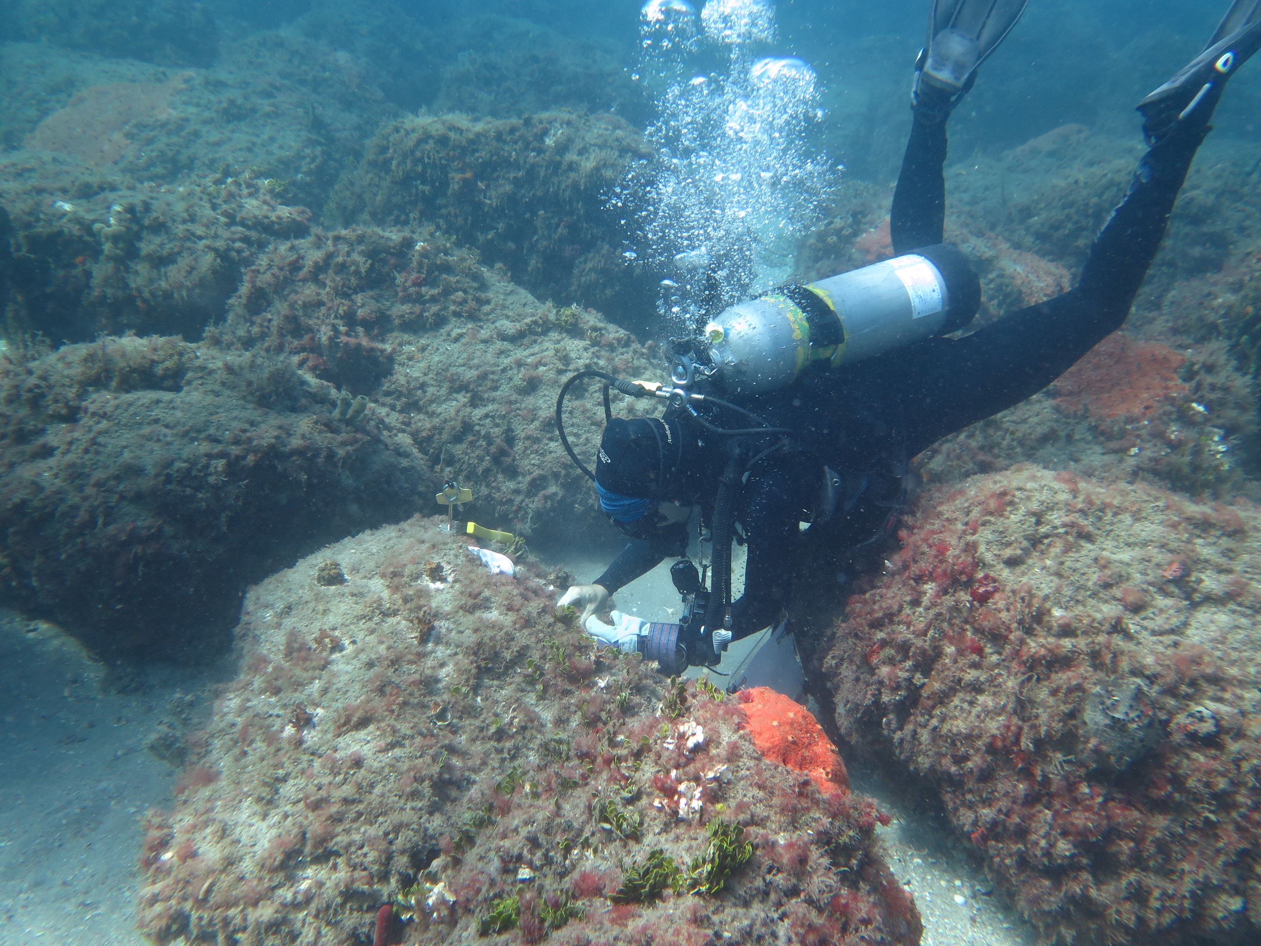 Coastal Eco-Group diver removing stony corals